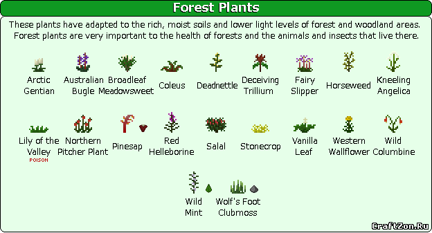 adaptive features of plants and animals in woodland
